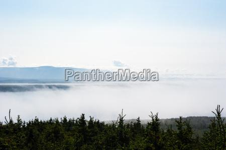 niedriger nebel zwischen baeumen und weitem
