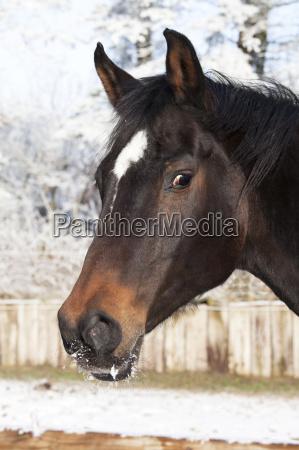 pferdekopf winter