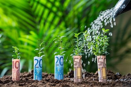 wasser, gegossen, auf, pflanzen, mit, euro-rechnungen - 15867409