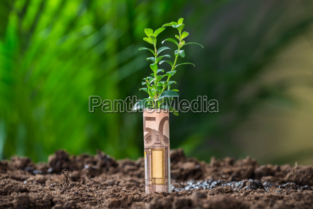 plant wrapped with euro note on