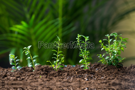 plants growing on land