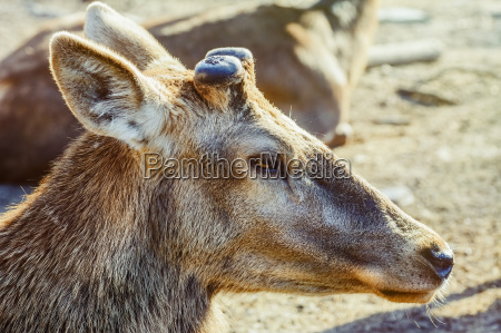 portrait von deer