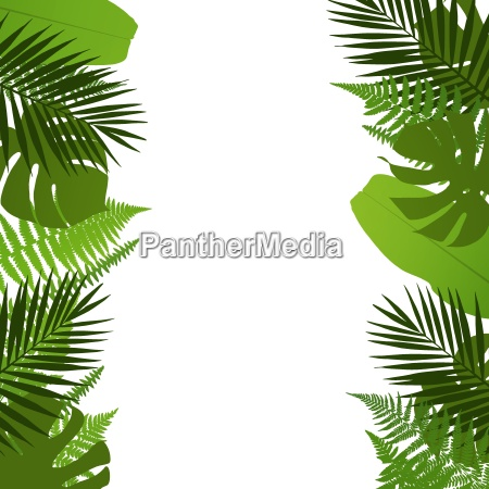 tropical leaves background with palm fern