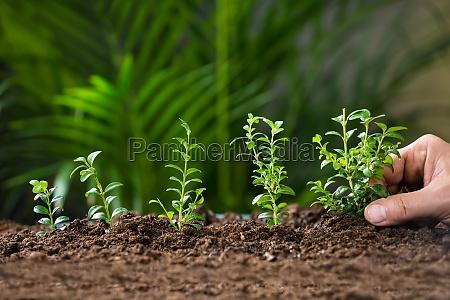 mans hand planting tree on ground