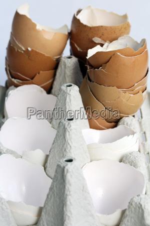 empty eggshells in an egg carton