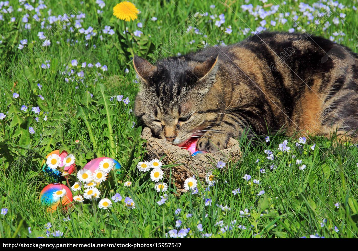 Ein Seltsamer Osterhase Eine Katze Als Osterhase Lizenzfreies