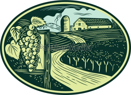 trauben vineyard winery oval holzschnitt