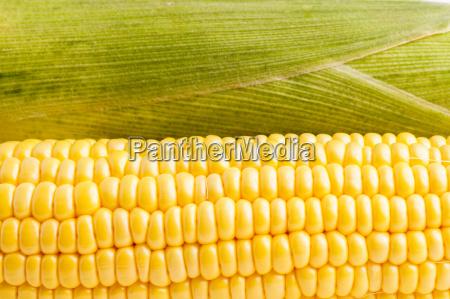 corncob bereit fuer essen und kochen