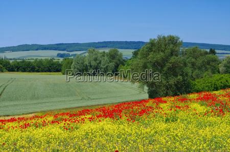 harzvorland landscape in harz mountains