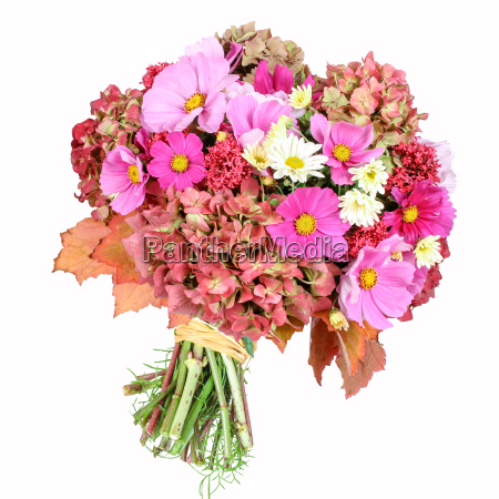 bouquet with cosmea and hydrangea