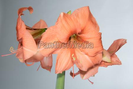 freisteller closeup nahaufnahme blume pflanze gewaechs