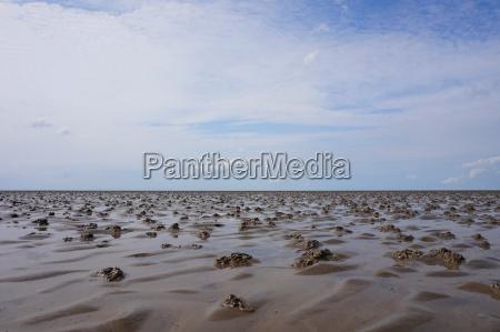 wattenmeer panorama