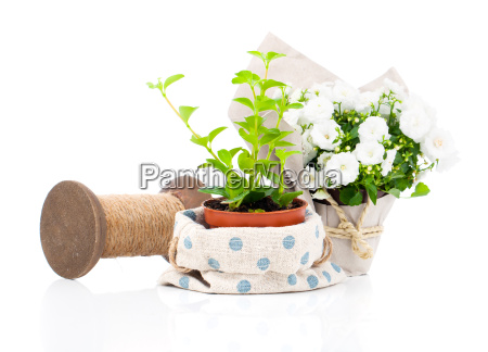 young plants are offered for sale