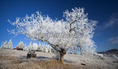 szronu kryty zima krajobraz