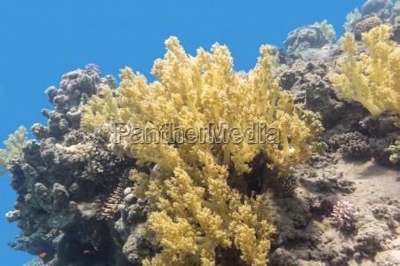 korallenriff auf dem grund des tropischen