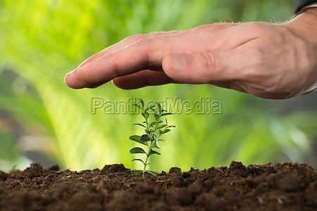 person hand schutz pflanze on land