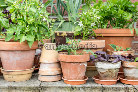 flowerpots with vegetables
