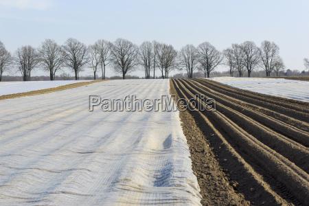 kartoffel kartoffelfeld ackerfurche nutzpflanze kartoffelacker feld