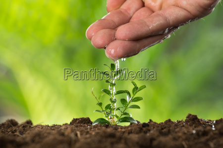 person hand watering to small plant
