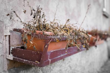 blatt baumblatt objekt einzel leben bestehen
