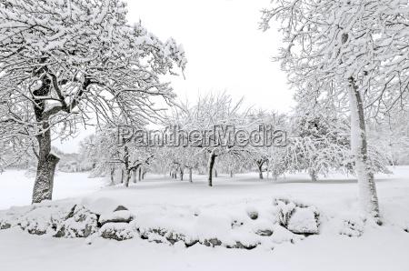albero alberi inverno natale paesaggio natura