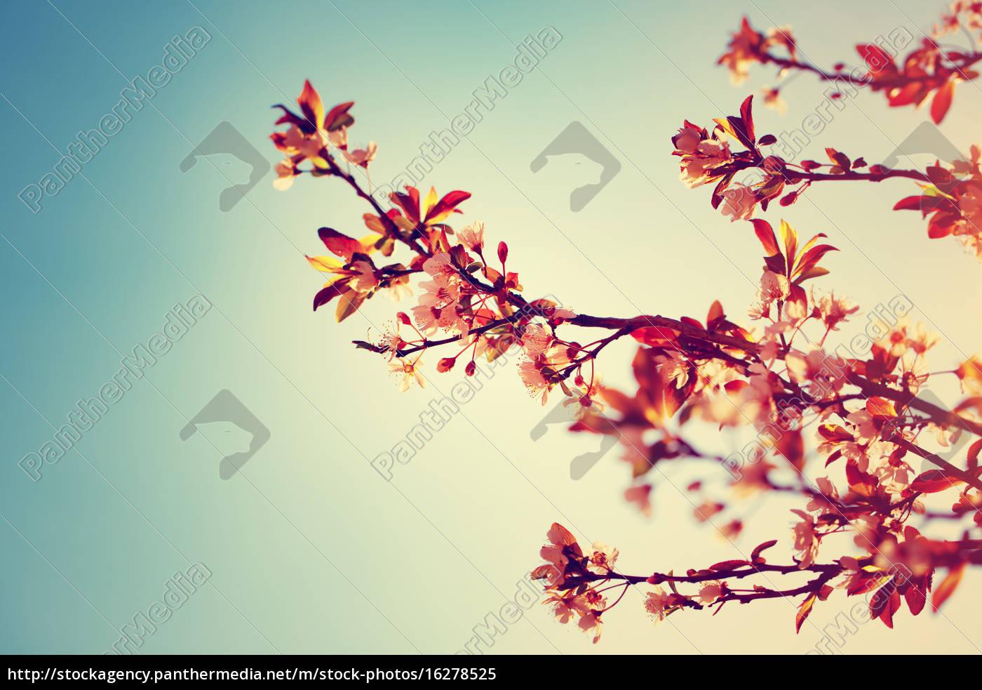 schöne, blühenden, baum, grenze - 16278525