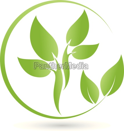 plantleaves logobionaturopath
