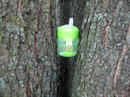 sippy cup between two trees