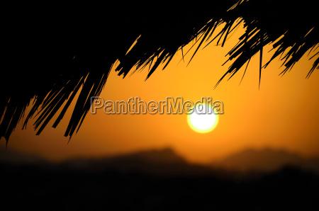 palmen und sonnenuntergang