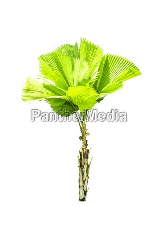 blatt baumblatt baum gebuesch busch wachstum