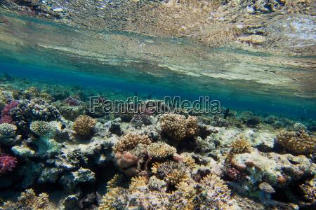 bunte korallen unter wasseroberflaeche