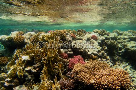 schoenes korallenriff unter wasseroberflaeche