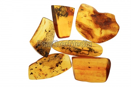 polished amber pieces with fossils in
