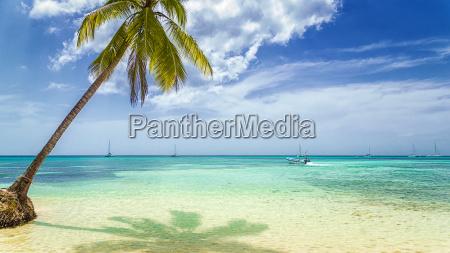 palme am sandstrand mit fischerboot