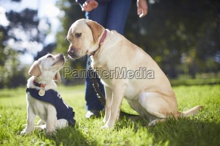 blindenhunde an hundetraining