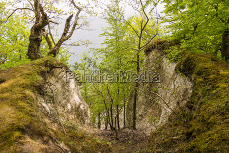 kuestenwald auf der insel ruegen