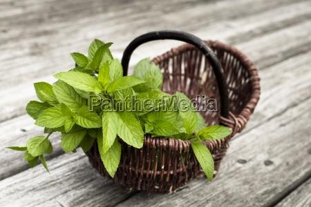 wickerbasket of fresh peppermint