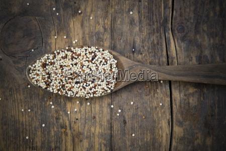 organic quinoa chenopodium quinoa tricolour on