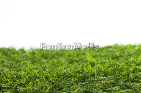 lawn isolated