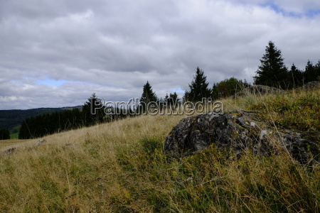 silberdisteln carlina acaulis am arnsberg bayerische