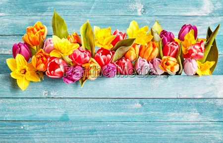 spring flowers border with copy space