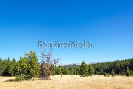 bighorn mountain landscape