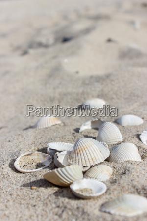 shells on the sandy beach