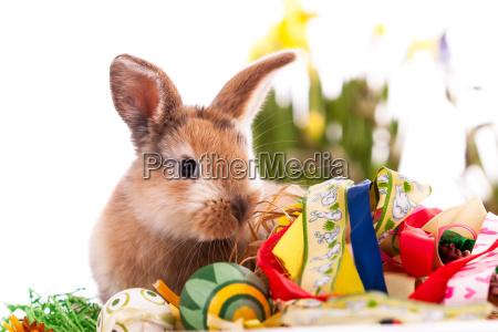 bunte, kaninchen, mit, ostereier, auf, weißem - 16438882