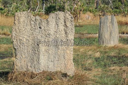 termitenbauten litchfield national park australien