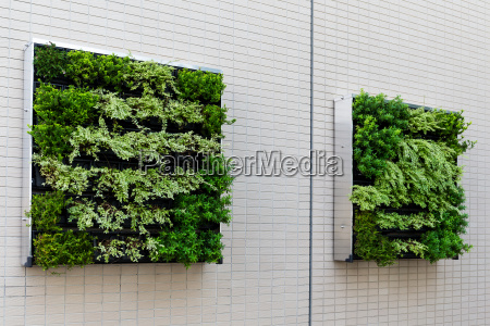 green plants on the wall for