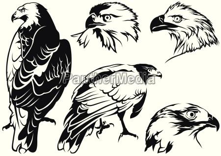 eagle taetowierung zeichnungen