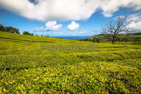 teeplantage in porto formoso erstaunliche landschaft