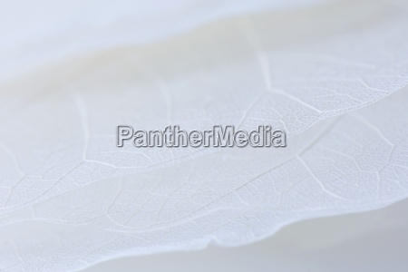 pale dried leaves extreme close up