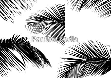palm leaf silhouetten
